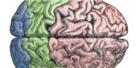 image: Neuroscientists Threaten to Boycott Brain Project