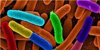 image: New Catalog of Human Gut Microbes