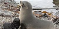 "image: Hitting a Climate ""Seal""-ing"