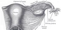 image: The Genetics of Menarche