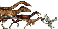 image: How Tinier Theropods Took Flight
