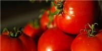 image: Light-Tolerant Tomatoes