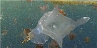 image: Killer Jelly Found in Australian Waters