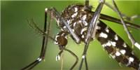 image: Gene x Gene x Environment