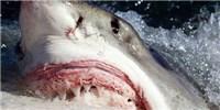 "image: ""Shark Week"" Veers Into Fiction . . . Again"
