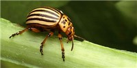 image: Image of the Day: Beetle Boom