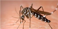 image: DARPA Challenge to Predict Chikungunya Spread