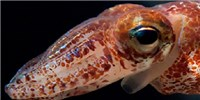 image: Image of the Day: Squid Shine