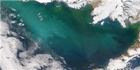 image: Viral Demise of an Algal Bloom