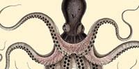image: Aristotelian Biology