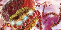 image: The Second Coming of RNAi
