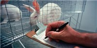 image: Certification No Guarantee of Animal Welfare