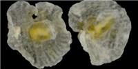 image: Image of the Day: Marine Mushrooms?