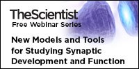 image: New Models and Tools for Studying Synaptic Development and Function