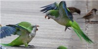 image: Image of the Day: Pecking Order