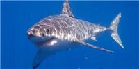 image: Shark Skin-Like Surface Fights MRSA