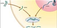 image: FDA OKs siRNA Ebola Drug