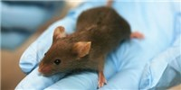 image: CRISPR Knock-in Mouse Debuts