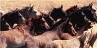 image: Image of the Day: Unbridled Herd