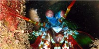 image: Shrimp-Inspired Cancer Camera