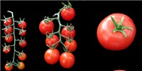 image: 360-Degree View of the Tomato