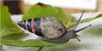 image: Snail Revival Raises Peer Review Debate