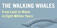 image: Walking with Whales