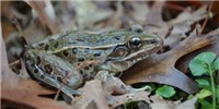 image: Image of the Day: Amphibian Amendment