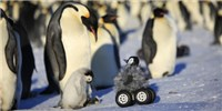 image: Image of the Day: Penguin Rover