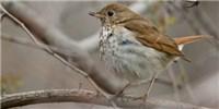 image: Birdsong Breakdown