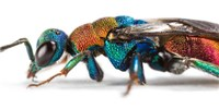 image: Genetic Data Clarify Insect Evolution