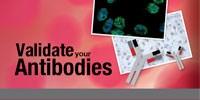image: Validate Your Antibodies