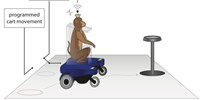image: Monkeys Learn to Steer Wheelchair