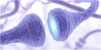 image: LabQuiz: Neuroscience