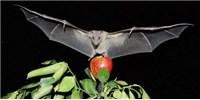 image: Bat Navigation Revealed