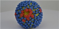 image: Mutated Flu May Dodge Vaccine Protection