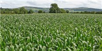 image: Europe Softens on GM Crops