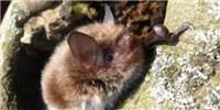 image: Bats Make a Comeback