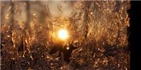 image: Image of the Day: Illuminated Ice