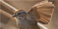 image: Image of the Day: Sparrow Signals