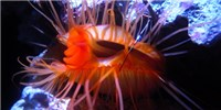 image: Panic of the Disco Clam