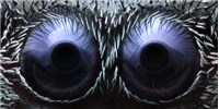 image: Image of the Day: Spider Eyes
