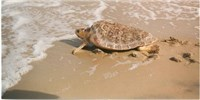 image: Turtle Magnetism