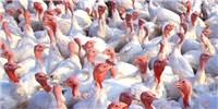 image: Bird Flu in North America