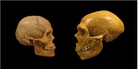 image: Fossil Traces Human Migration Out of Africa