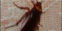 image: Roach Conformity