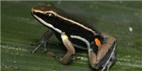 image: Frog Nurseries