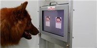 image: Canine Facial Recognition