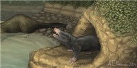 image: Two New Jurassic Mammals Found