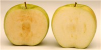 image: U.S. Approves Genetically Engineered Apples